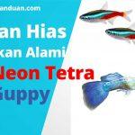 Makanan ikan neon tetra dan guppy