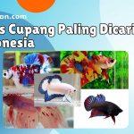 12 Jenis Cupang Paling Dicari di Indonesia
